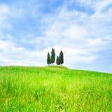 Cipresgroep en gebieds landelijk landschap in Orcia, San Quirico, Toscanië. Italië Stock Foto's