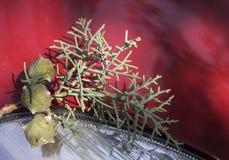 Cipreskegels door auto Royalty-vrije Stock Fotografie