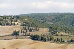 Cipressen in Toscanië, Italiaans landschap royalty-vrije stock afbeelding