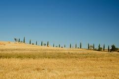 Cipressenweg in tuscanian heuvels Royalty-vrije Stock Afbeelding