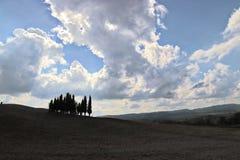 Cipressi av Tuscany fotografering för bildbyråer