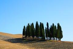 Cipressi famosi in valle di Orcia immagine stock libera da diritti