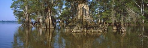ciprestes do Velho-crescimento no estado de Fausse Pointe do lago imagens de stock royalty free