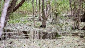 Cipreswortels, Moeras, Groot Cipres Nationaal Domein, Florida Stock Foto