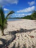 Circa per coltivare più lungamente questa palma nella spiaggia fotografie stock libere da diritti