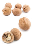 Circassian walnut Stock Photography