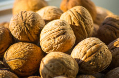 Circassian walnuts in plate Royalty Free Stock Image
