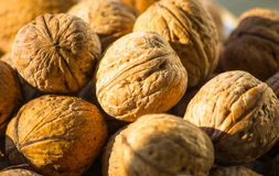 Circassian walnuts in plate. Circassian walnuts in the white plate, closeup Stock Photography