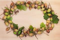 Circle with acorns Royalty Free Stock Photo