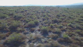 Circle around male deers running in the smoothness. 2 deers running over bush, Male animals camera around them stock video