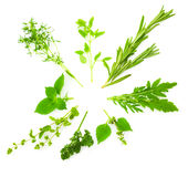 Circle Border of Different Fresh Spice Herbs / isolated on whi royalty free stock photography