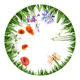 Circle border from grass and spring flowers stock photos