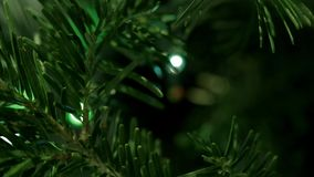 Circle bright spotlights on a green tree stock video footage
