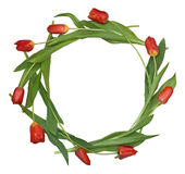 Circle composition from tulips Stock Photos