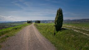Famous Circle of Cypress trees in Tuscany