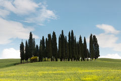 Circle of cypress trees in Tuscany Royalty Free Stock Image