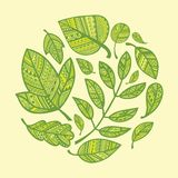 Circle of decorative green leaves Royalty Free Stock Photos