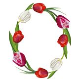 Circle festive tulip flowers frame on a white background isolate stock photo