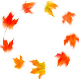 Circle frame of autumn maple leaves in motion. Abstract blurred Stock Images