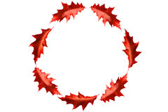 Circle frame from bordeaux leaves Royalty Free Stock Photo