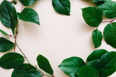 Circle frame of branches stock photography