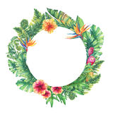 Circle frame with branches purple Protea flowers, hibiscus and tropical plants. Hand drawn watercolor painting on white background Royalty Free Stock Photography