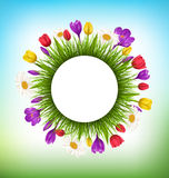 Circle frame with grass and flowers. Floral nature background Stock Image