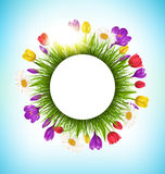 Circle frame with grass flowers and sunlight. Floral nature back Stock Photography
