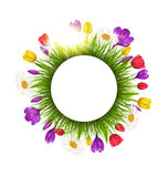 Circle frame with grass flowers and sunlight. Floral nature back Stock Photos