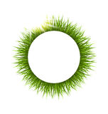 Circle frame with grass and sunlight. Floral nature background Royalty Free Stock Photo