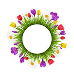 Circle frame with green grass and flowers isolated on white Royalty Free Stock Images