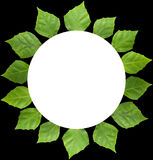 Circle frame of  leaf Stock Images