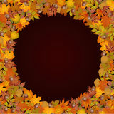Circle frame made of autumn leaves Stock Image