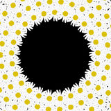 Circle frame made of daisy flowers Stock Images