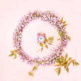 Circle frame of pink alarm clock and beautiful wisteria flowers branch with blossoms buds on pink background. royalty free stock photo