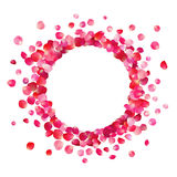Circle frame of pink rose petals. On white background Stock Photo