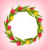 Circle frame with tulips red and yellow flowers on pink Royalty Free Stock Images
