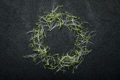 A circle of fresh microgreen vegetable salad on a black background, space for text stock photography