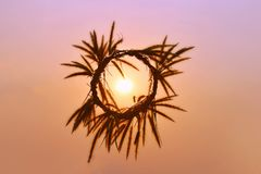 A circle from the grass made from hand in sky, the sun in middle, with colorful of sunset light.  royalty free stock photos