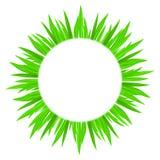 Circle of grass. Royalty Free Stock Image