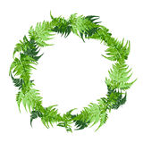 Circle of green fern leaves, plant vector illustration. Circle of green fern leaves, plant vector, illustration Stock Image