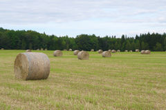 Circle hay bale in field farm agriculture rural landscape meadow straw Royalty Free Stock Image