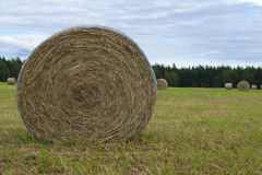 Circle hay bales country farm field meadow landscape agriculture rural pasture Stock Photos