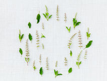 The circle of holy basil. Royalty Free Stock Photography