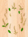 The circle of  holy basil leaf and flower on wooden. Royalty Free Stock Images