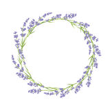 Circle of lavender flowers Royalty Free Stock Photos