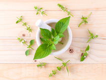 The circle of lemon basil leaf and flower Stock Images