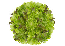 Circle lettuce background Royalty Free Stock Photo