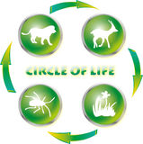 Circle of life Stock Image