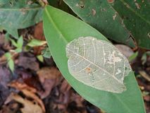 Circle of life. Nature, green leaf, hiking, natural process, structure Stock Photo